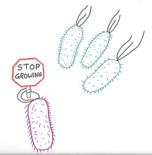 stop growing
